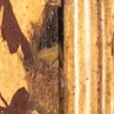 Detail of a painting from Knole House showing an example of IMPASTOW delimitation type D with dark paint layer exposed